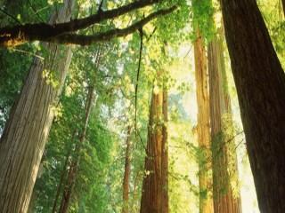 卧龙原始森林